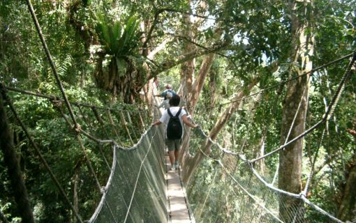 世界遺産キナバル公園とポーリン温泉観光ツアー(コタキナバル発)