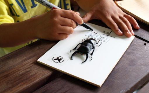 ベーシックプラン(オリジナル標本作りと昆虫観察)