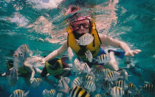 パヤ島体験ダイビングプラン(コーラルガーデンパヤ島日帰りツアー)