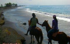 2時間の乗馬体験(バリ島でホースライディング!)