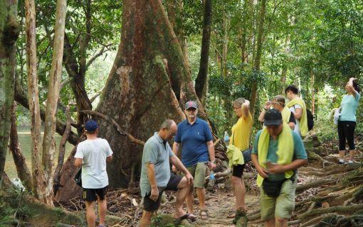 ジャングル体験!タマンネガラ国立公園ムティアラに泊まる3泊4日 (クアラルンプール発)