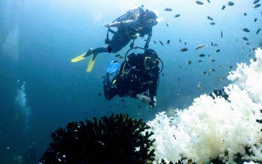 ダイビング体験プラン(パヤ島シュノーケリング)