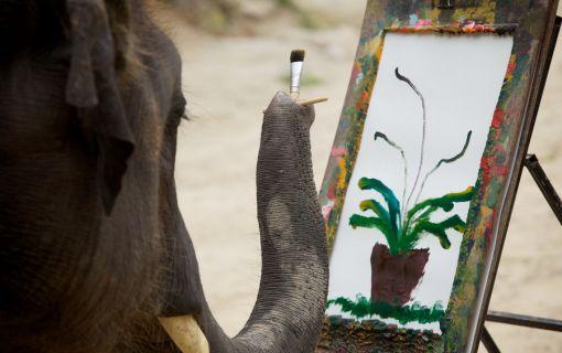 可愛い象さんのショーが盛りだくさん!象のキャンプと首長族