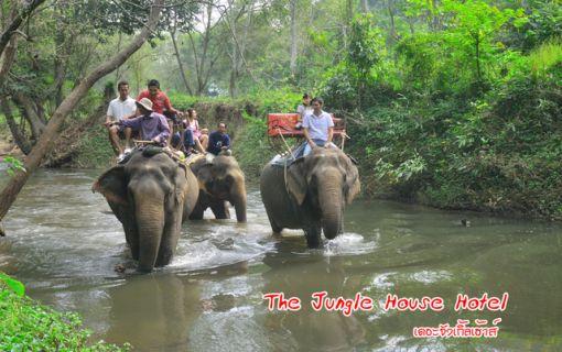 世界自然遺産!カオヤイ国立公園!滝の水量も増し迫力のシーズン!(バンコク発)