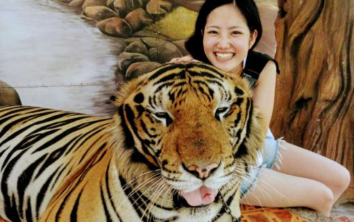 【バンコク発】トラとの写真撮影など充実したオプションが大人気!シラチャー・タイガーズー