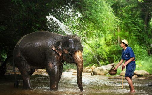 【チェンマイ発】お絵描き象さんに会える!象のキャンプと首長族